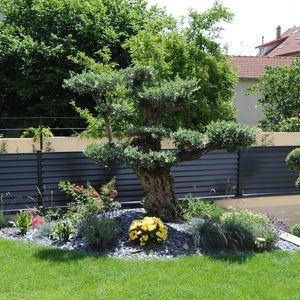 Le jardin environnant la piscine est très paysagé, ici un bel olivier centenaire.